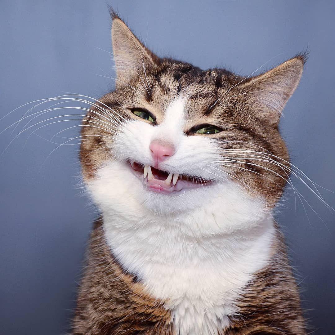 Фото приколы с лысыми кошками красотка честно